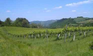 Manutencoop recupera le vigne bio di Nugareto