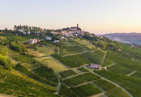 Con Stella Wines, i Moratti investono nel vino