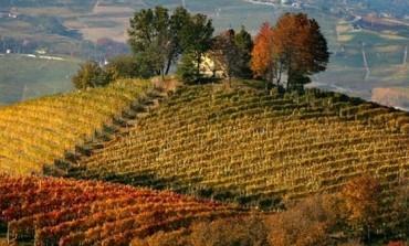 Wine Owners punta su Barolo e Barbaresco