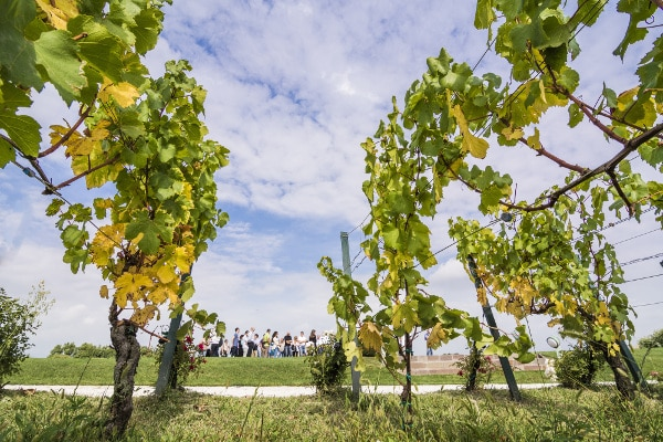 Questo weekend torna il Festival Franciacorta in Cantina