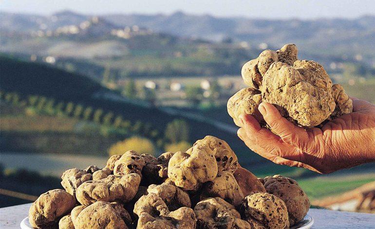 Tartufo come oro, 4.500 euro al chilo per il pregiato