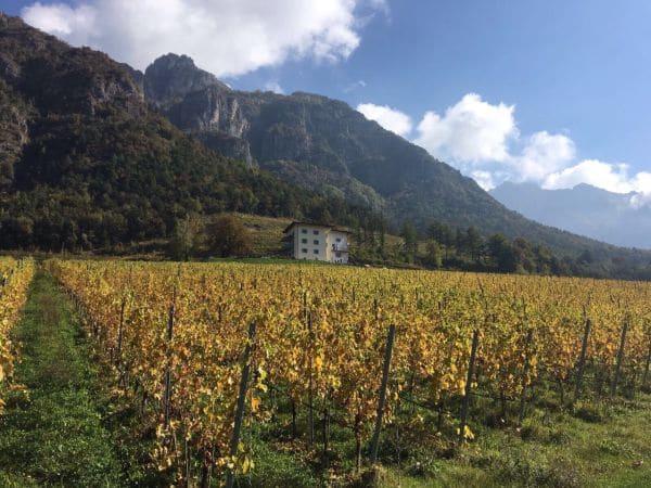 Hofstätter scende lungo l'Adige e si compra Maso Michei