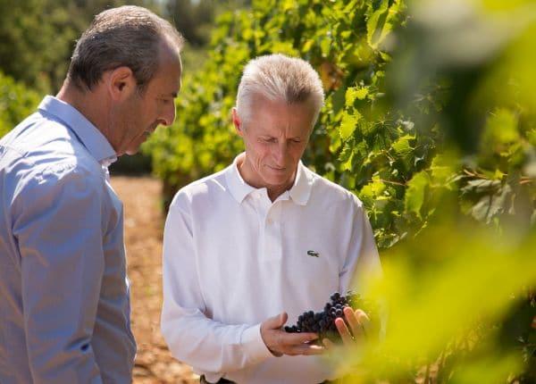 Illy a tutto vino, manovre in corso a Montalcino