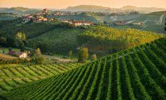 Piemonte, nel 2017 altissima qualità ma poche bottiglie