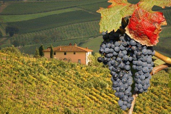 Toscana, vini da un miliardo ma 2017 avaro