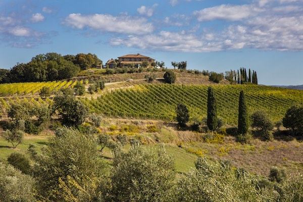 Bulgheroni punta oltre i 20 milioni tra olio, vino e hospitality