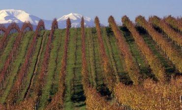 Nelle Marche i fondi investiti in vino si moltiplicano per 7,5