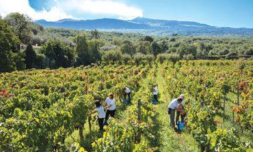 Etna doc, la carta vincente della Sicilia