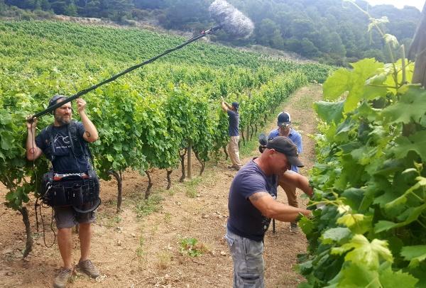 Frescobaldi e Gorgona, il vino della colonia penale