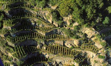 Fondi a sostegno dei viticoltori eroici