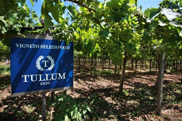 La promozione di Tullum da dop a docg