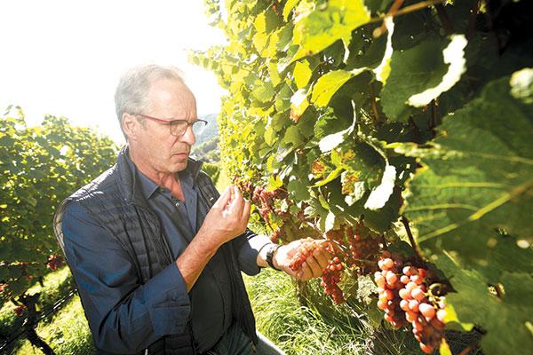 Hans Terzer alla sfida del Pinot Noir