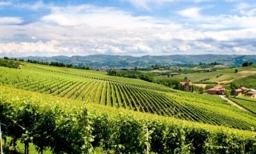 Fashion&wine, Miroglio compra in Alta Langa e Monferrato