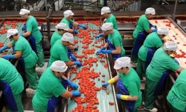 Pomodoro, crescono export e fatturato