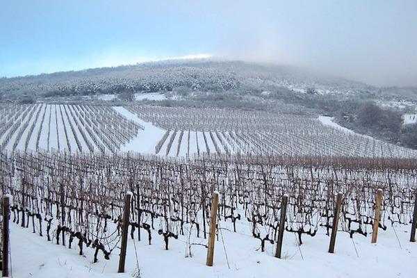 Il clima 'gela' i vini francesi. Perdite fino a 2 mld