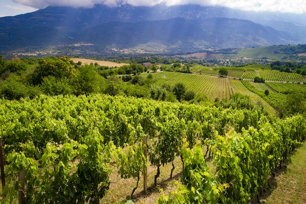 Il vino d'Abruzzo 'degusta' ripresa a 2 cifre